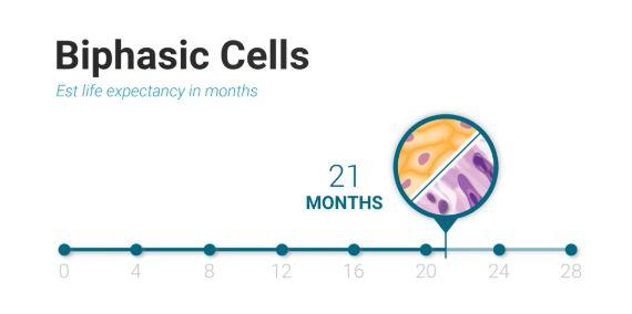 biphasic Cells
