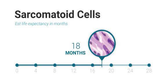sarcomatoid Cells